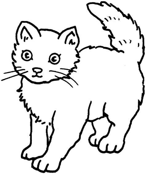 gambar mewarnai kucing imut belajarmewarnai info