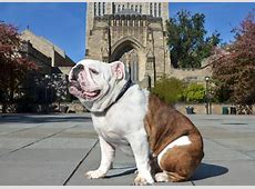 For Handsome Dan XVII, it's a really nice dog's life