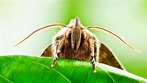 Comment Reconnaitre Mite Alimentaire Ou Textile : les mites attaquent ~ Melissatoandfro.com Idées de Décoration