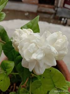 pin by nitesh pal on my saves in 2020 flowers plants