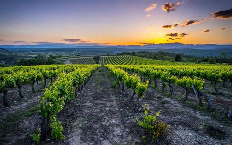 France holidays offer you a special luxury holiday and a dream holiday with fabulous facilities, cuisine and culture. France summer holidays guide: food and wine