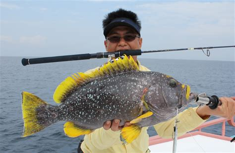 grouper yellow fish fin lure luring passion haven sharing nice nicer porridge even