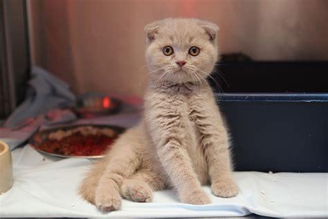 katzen transportbox für 2 katzen transportkatzen seit vier wochen im tierheim 18 katzen