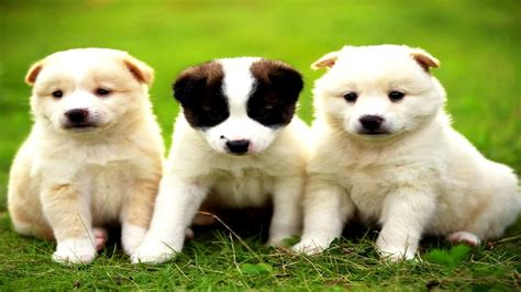 los perritos mas tiernos lindos chiquitos bonitos