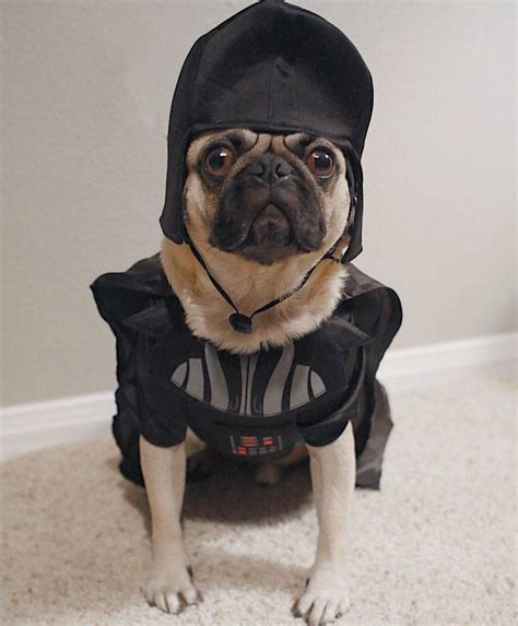 May the 4th be with you! StarWars....pugs #pug #pugs # ...