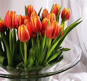 Tulpen Im Topf In Der Wohnung : frische blumen bringen den fr hling ins haus und sorgen f r gute laune ~ Buech-reservation.com Haus und Dekorationen