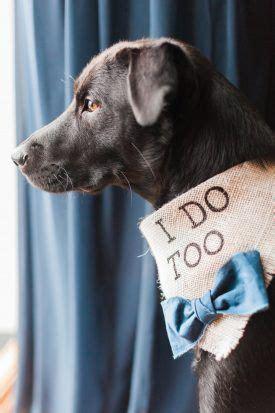 dog ring bearer city tavern club dc wedding meagan wedding stuff in 2019