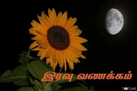 tamil good night sms wishes images  facebook whatsapp picture sms txtsms