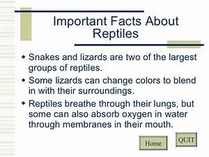 Reptiles Vs. Mammals