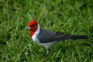 Hawaiian Native Birds of Hawaii