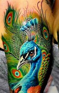 50, Outstanding, Peacock, Tattoo, Designs