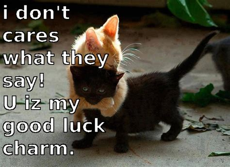 Good Luck Cat Meme - good luck cat quotes quotesgram