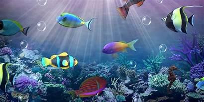 Desktop Wallpapers Aquarium Moving Wallpapersafari Install