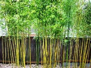 Bambou A Planter : bambou d co 40 id es pour un d cor jardin avec du bambou ~ Premium-room.com Idées de Décoration