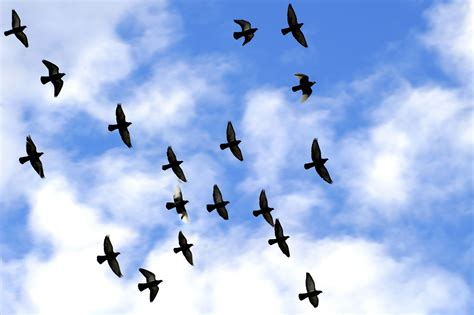 image gallary 1 birds flying flying birds pictures and