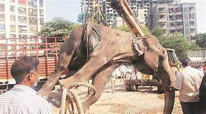 Red Resume Mumbai Elephant Dies At Owner S Home Cities News The