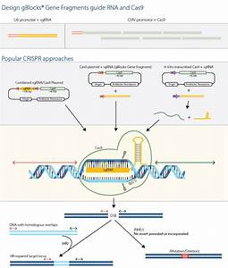 Crispr And Cas9 For Flexible Genome Editing