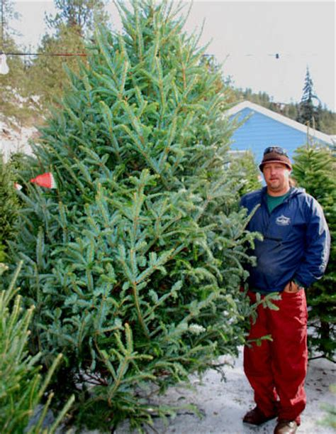 top 28 which christmas tree is the most fragrant