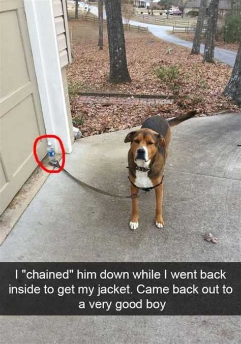funny animal pictures  memes  wont stop laughing