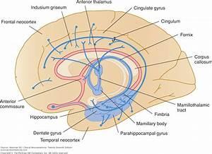 Neuroanatomy: Clinical Neuroanatomy