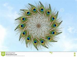Beautiful Peacock Feather In Sky Background Stock Image ...