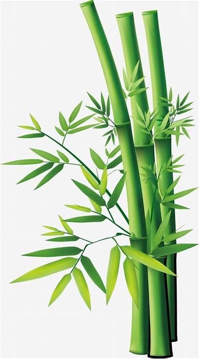 Bamboo Cartoon Drawing Vector Background C4 Transparent