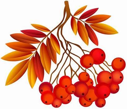 Autumn Leaves Plant Leaf Clipart Deco Hemisphere