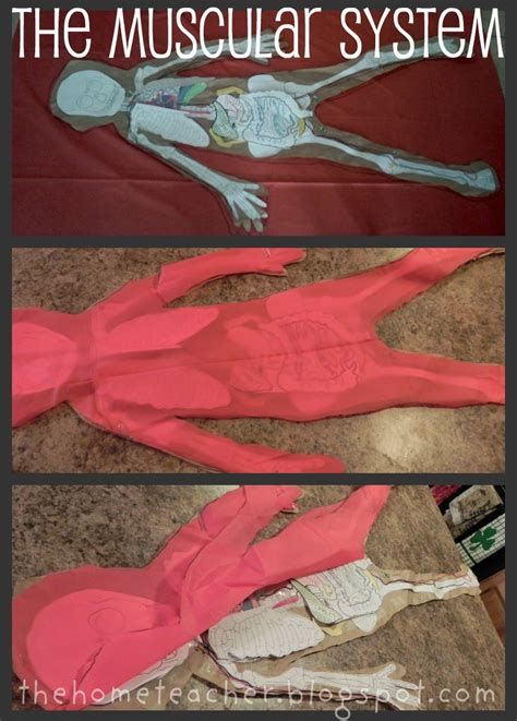 home teacher human body printables