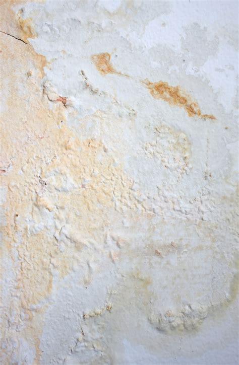 wasserschaden keller mietwohnung schimmel in der mietwohnung 187 wer haftet