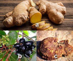 macam tanaman obat keluarga toga lengkap khasiat