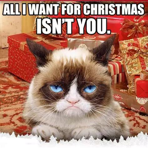 All I Want For Christmas Meme - grumpy cat christmas memes comics and memes