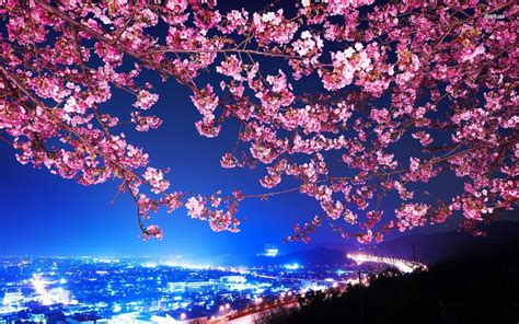 pin  ebs  paddle ideazzz cherry blossom wallpaper