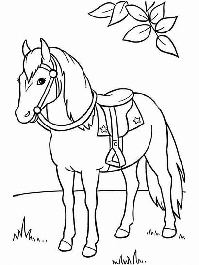 Coloring Pages Horse Horses Animals Printable