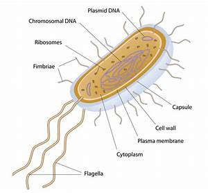 Labeled Bacteria Cell
