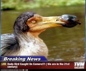 The Dodo's | Spartacus2030