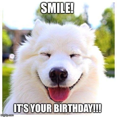 Puppy Birthday Meme - dog birthday meme birthday meme funny dog dog happy birthday funny memes happy birthday