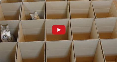 gorgeous kitties enjoying  cardboard maze