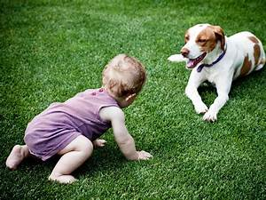 Newborn Chart Development When Can My Baby Play With A Dog Babycenter