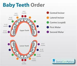 Baby Teeth Order And Knowing When Teething Starts