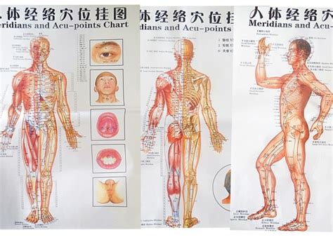 Free shipping color body acupuncture points chart