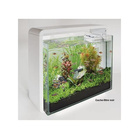 aquarium poisson blanc home 40 superfish aquariums animal co
