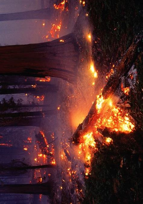 Sequoia National Forest Fire