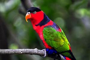 why-are-parrots-so-colorful-parrot-desktop-wallpapers ...