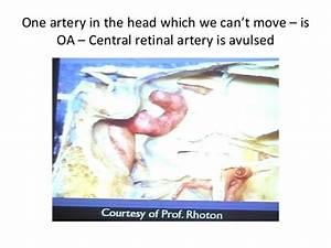 Cranial Nerves 360 U00b0