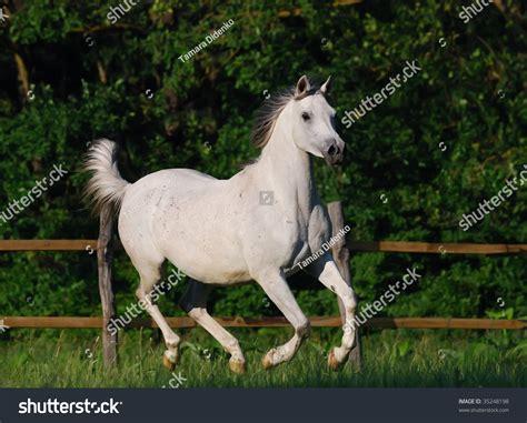 arabian motion horse gentle shutterstock