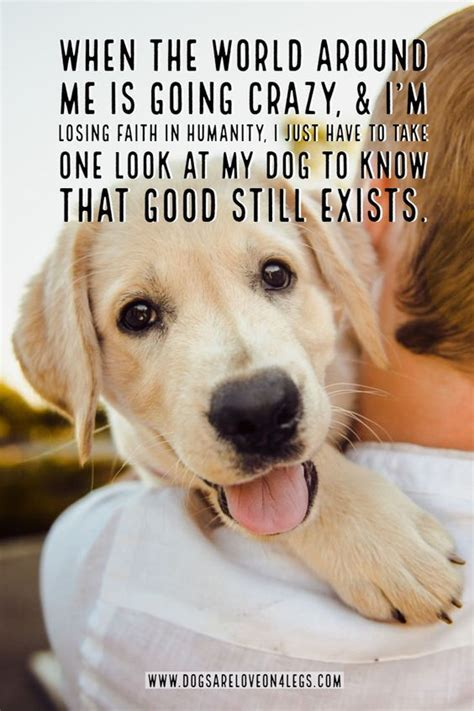 funny labrador dog quotes  sayings page