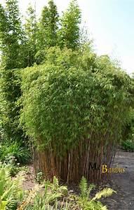 Bambus Im Garten : bambus im garten bambus im garten als sichtschutz ~ Michelbontemps.com Haus und Dekorationen