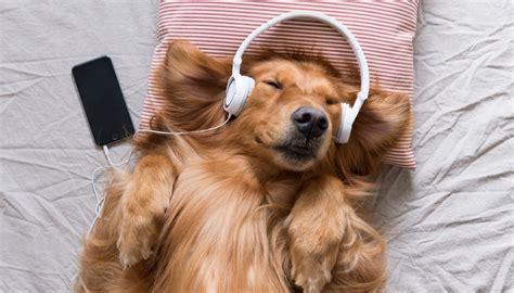 calming   dogs        benefit