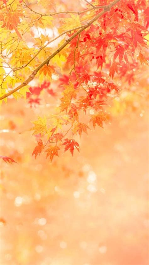 Fall Backgrounds For Phone by Fall Iphone Wallpaper Tech In 2019 Iphone