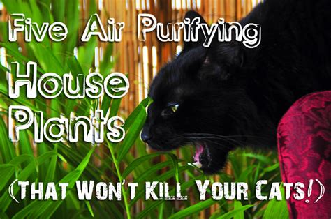 low light indoor plants safe for cats five air purifying house plants that won t kill your cat